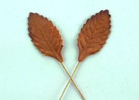 Green Tara  Leaves - Copper 2.5cm