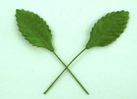 Green Tara  Leaves - Green 2.5cm
