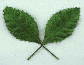Green Tara  Leaves - Green 3.5cm