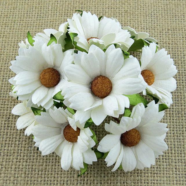 Mulberry Flowers - Chrysanthemum - White