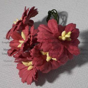 Mulberry Flowers - Cosmon Daisy - Light Maroon