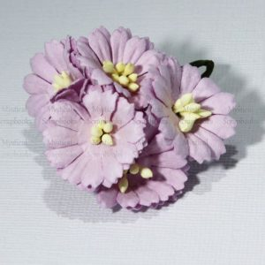 Mulberry Flowers - Cosmon Daisy - Lilac