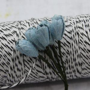 Tulip - Blue