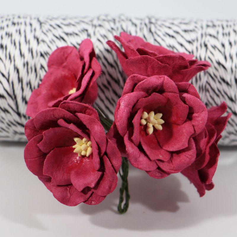 Magnolia - Claret