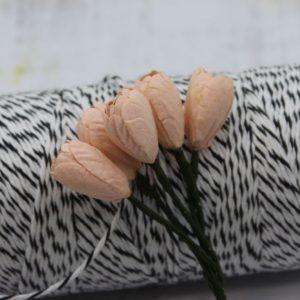 Tulip - Peach