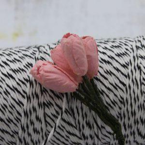 Tulip - Pink