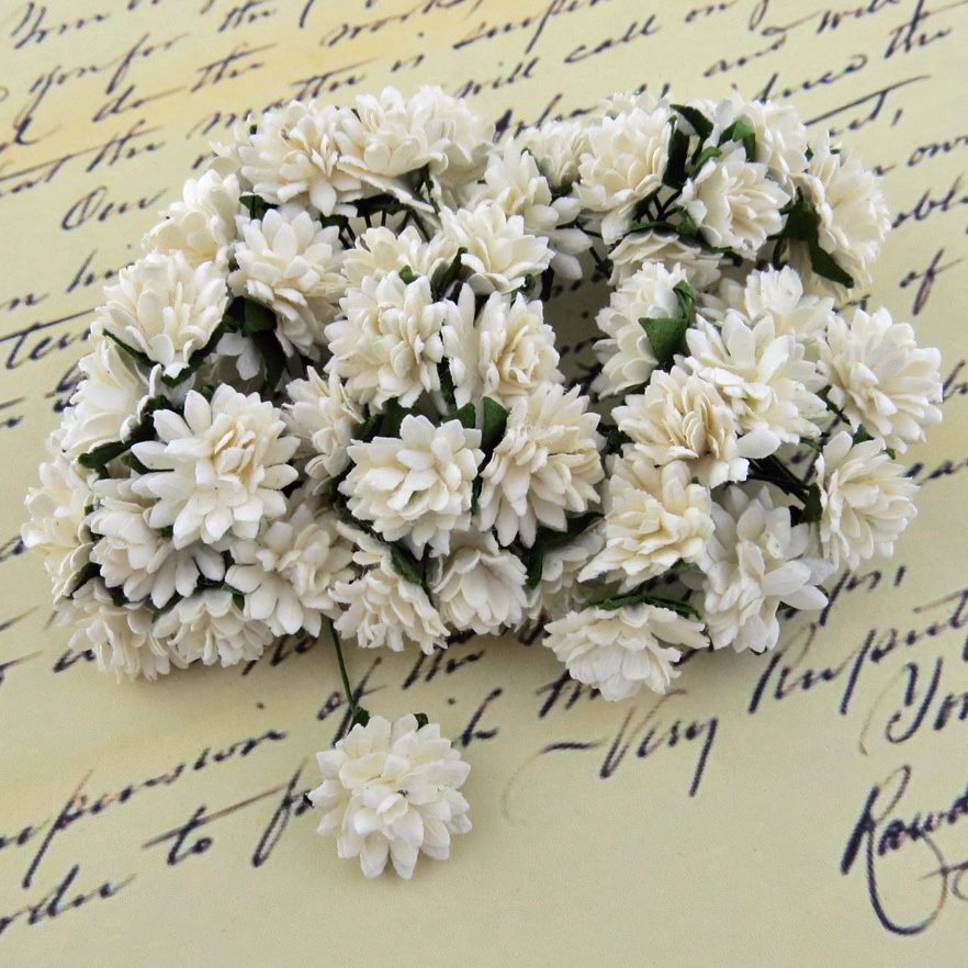 Mulberry Flowers - Aster Daisy White