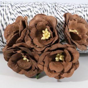 Magnolia - Chocolate